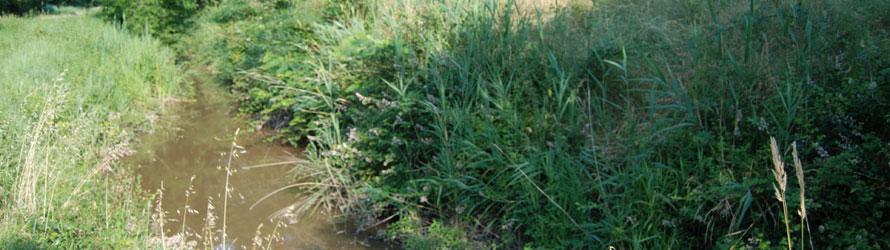 C-3E ingénierie, filiale du groupe CETAB, réalise le volet qualité des eaux dans le cadre du plan de gestion global des marais du Blayais.
